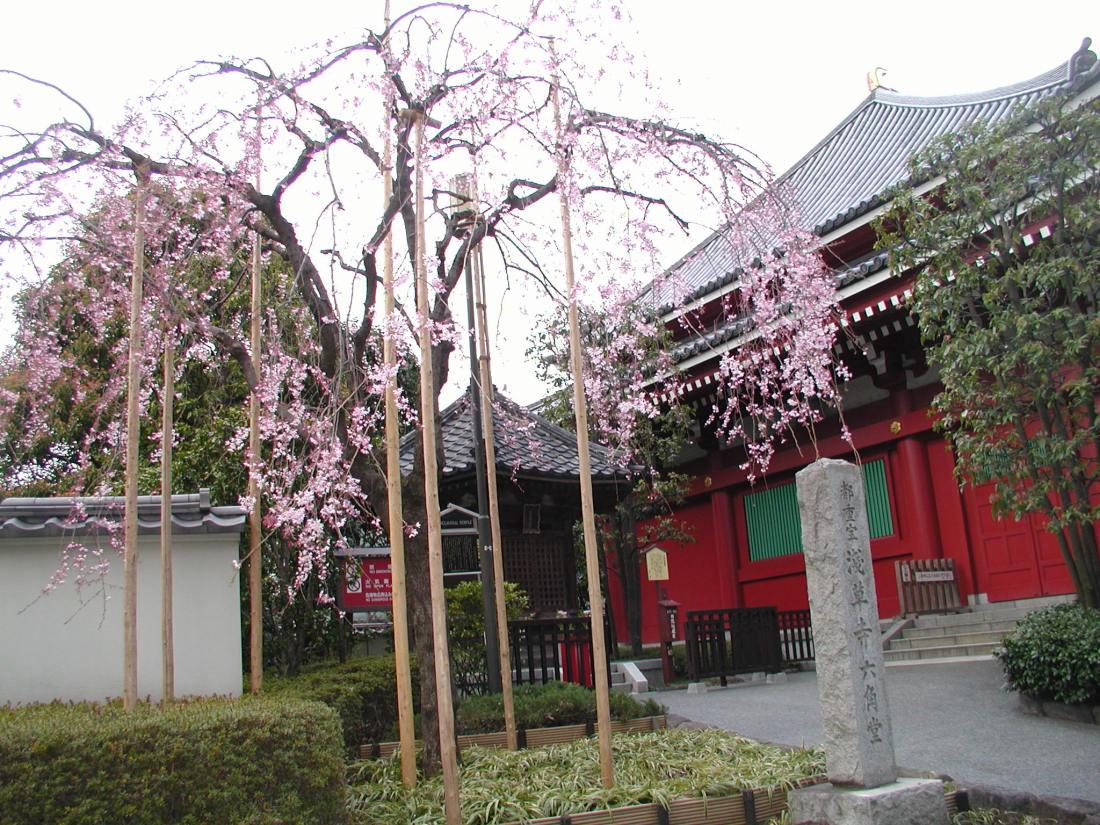 桜花見(H21) 142