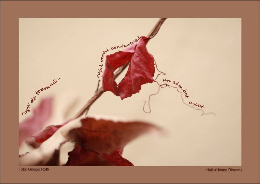 For New Year 2012 (14) : Photo Haiku by Ioana Dinescu, Romania (4/6)