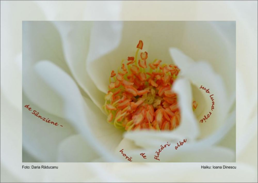 For New Year 2012 (14) : Photo Haiku by Ioana Dinescu, Romania (3/6)