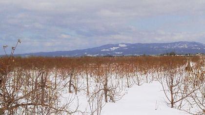 雪のりんご園(3)