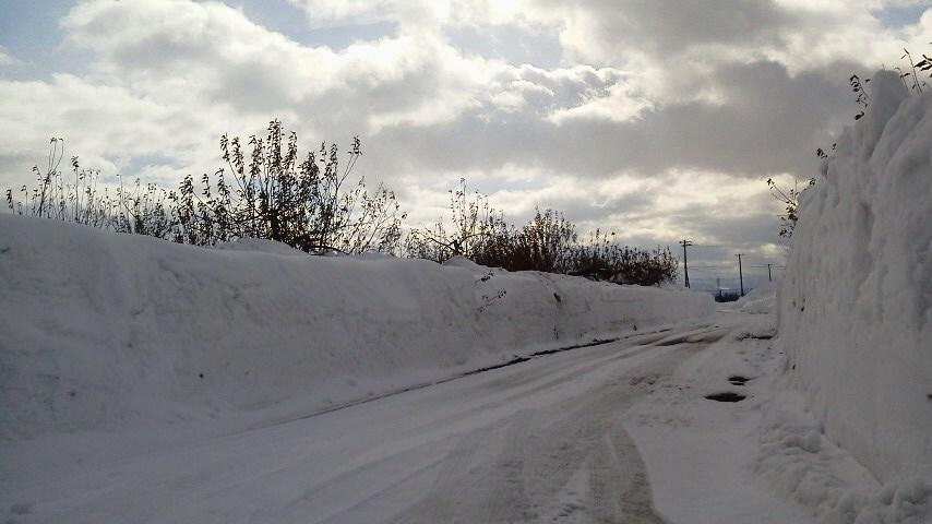 雪のりんご園(5)