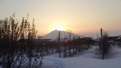 雪のりんご園(6)
