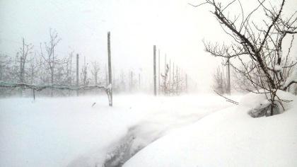 雪のりんご園(7)