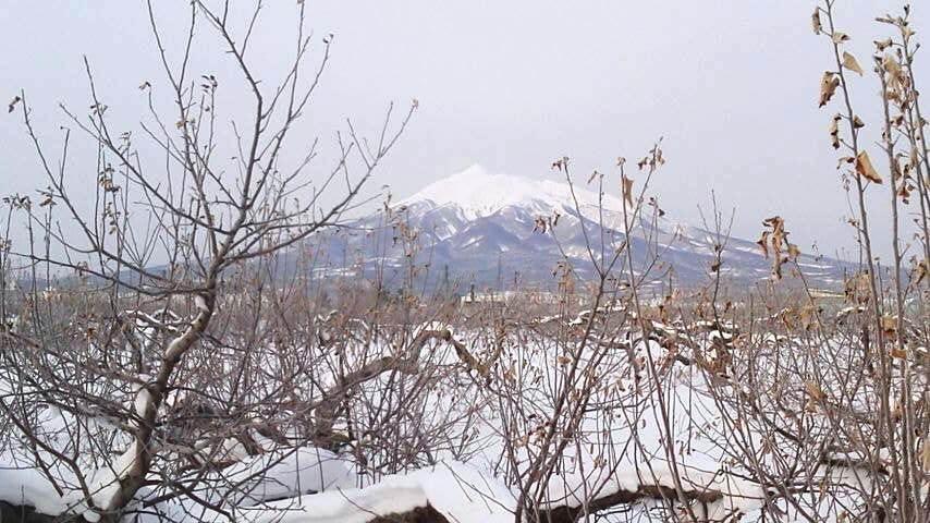 雪のりんご園(8)