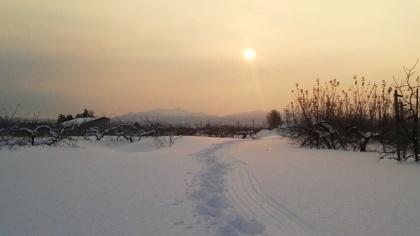 雪のリンゴ園(10)